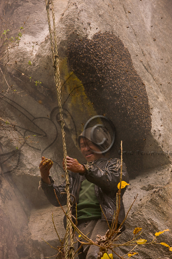 "The rebokipe are the ladder attendants (""rebo"" means rope ladder in the Rai language). With their full weight hanging from the ladder, they keep it pulled tight to facilitate the guru's progress and move the ladder from one nest to another."