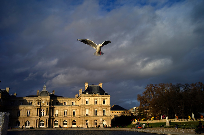 A seagul flies over the pond in the middle of the Jardin du Luxembourg (Luxembourg Gardens) in the 6th arrondisement of Paris on 26 November 2009.