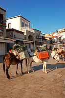 Pack Ponies waiting to be loaded with goods on Hydra, Greek Saronic Islands