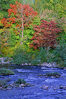 Fall colors line the banks of the Chippewa River just south of Lake Superior Provincial Park in south western Ontario, Canada