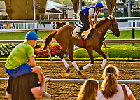 BALTIMORE, MD - MAY 18: Gunnevera exercises in front of watching fans in preparation for the Preakness Stakes this Saturday at Pimlico Race Course on May 18, 2017 in Baltimore, Maryland.(Photo by Scott Serio/Eclipse Sportswire/Getty Images)
