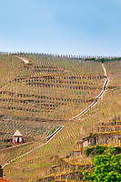 Terraced vineyards in the Cote Rotie district around Ampuis in northern Rhone planted with the Syrah grape. A very steep slope with a tool shed hut pointed red and with white letters VF indicating Vidal Fleury and a water trench ditch canal.  Ampuis, Cote Rotie, Rhone, France, Europe