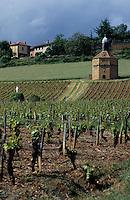 Europe/France/Rhône-Alpes/69/Rhône/Bagnols: Vigne et pigeonnier  extérieur du Château de Bagnols du XVII è