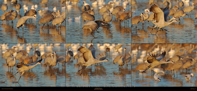 © 2005 -- Ron Reznick.http://www.digital-images.net..[#Beginning of Shooting Data Section].Nikon D2X..Focal Length: 500mm..Optimize Image: ..Color Mode: Mode II (Adobe RGB)..Noise Reduction: OFF..2005/12/28 07:31:12.3..Exposure Mode: Aperture Priority..White Balance: Color Temp. (5600 K) ..Tone Comp: Less Contrast..RAW (12-bit) ..Metering Mode: Multi-Pattern..AF Mode: AF-C..Hue Adjustment: 0°..Image Size:  4320 x 2868..1/400 sec - F/5.6..Flash Sync Mode: Not Attached..Saturation:  Normal..Exposure Comp.: -0.7 EV..Sharpening: Normal..Lens: 500mm F/4 D..Sensitivity: ISO 200..Image Comment:                                     ..[#End of Shooting Data Section].