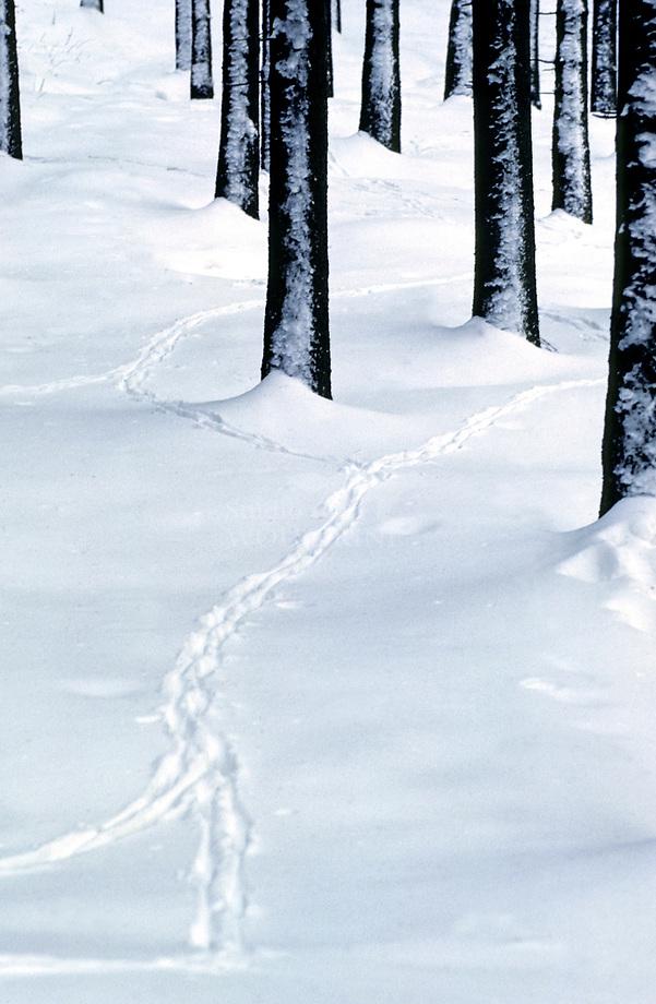 Diersporen in diepe sneeuw