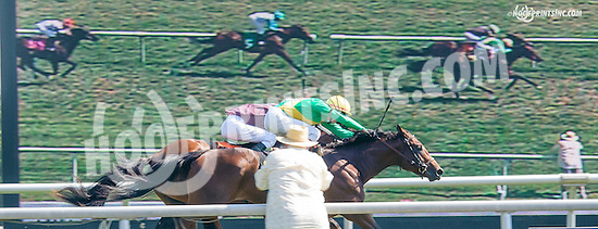 Noble Quality winning at Delaware Park on 8/26/15