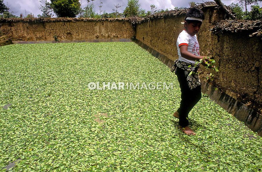 Secagem de folhas de coca. 2002. Bolivia. Foto de Ricardo Azoury.