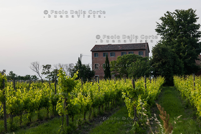 Venice | Island of Sant'Erasmo | Orto di Venezia | panoramic view of the vineyards and vacation rental Casa Rossa
