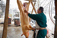 Traditional pig killing day - Valem Hungary