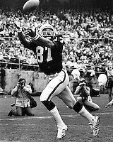 Raider tight end Raymond Chester grabs a TD pass. (1972 photo by Ron Riesterer)