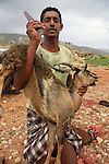 .Goats slaugthering for the Aid fest; Socotra Yemen