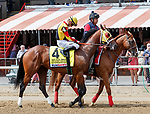 Givemeaminit in the post parade as Promises Fulfilled (no. 1) wins the Allen Jerkens  Stakes (Grade 1), Aug. 25, 2018 at the Saratoga Race Course, Saratoga Springs, NY.  Ridden by  Luis Saez, and trained by Dale Romans, Promises Fulfilled finished 1 1/4 lengths in front of Seven Trumpets (No. 5).  (Bruce Dudek/Eclipse Sportswire)