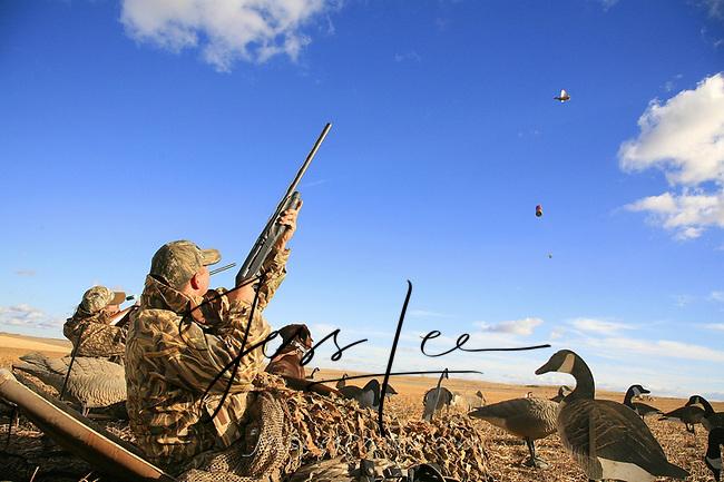 Waterfowl hunter shooting. Waterfowl hunting