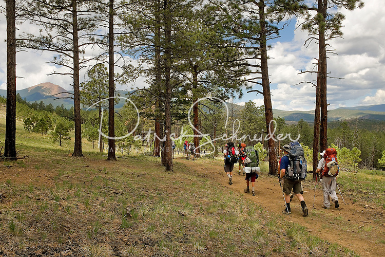 Photo story of Philmont Scout Ranch in Cimarron, New Mexico, taken during a Boy Scout Troop backpack trip in the summer of 2013. Photo is part of a comprehensive picture package which shows in-depth photography of a BSA Ventures crew on a trek. In this photo a BSA Venture Crew makes their way across a trail en route to Baldy Mountain in the backcountry of the Philmont Scout Ranch.<br /> <br /> The Photo by travel photograph: PatrickschneiderPhoto.com