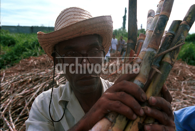 Cosecha de caña de azucar en forma manual y con carros de bueyes cerca de Camaguey. Luego del colapso de la economia cubana, la agricultura ha regresa a las condiciones de un siglo atras..+trabajador *Manual sugar cane harvest in the Cuban country side near Camaguey. Because the collapse of the economy, agriculture is back to old time, working manually and with the only help of ox carts.