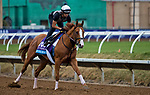 DEL MAR, CA - NOVEMBER 01: Good Magic, owned by eFive Racing Thoroughbreds & Stonestreet Stables, LLC and trained by Chad C. Brown, exercises in preparation for Sentient Jet Breeders' Cup Juvenile at Del Mar Thoroughbred Club on November 1, 2017 in Del Mar, California. (Photo by Jesse Caris/Eclipse Sportswire/Breeders Cup)