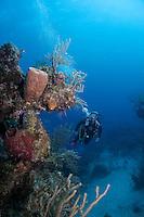 Diver exploring coral reef, Exumas, Bahama Islands