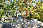 A home on remote Shaw Island with a graceful Madrone tree.