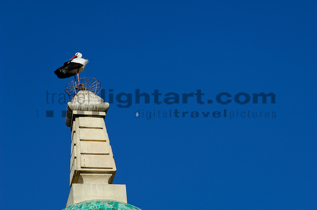 Stork, Ciconia ciconia, Sanlucar de Barrameda, Cadiz, Andalucia, Spain, Architektur, bauten, Bauwerk, Bauwerke, Gebäude, Turm, Türme, Turmspitze, Turmspitzen, Architecture, building, buildings, spire, tower, towers, Andalusia, Costa de la Luz, Europe, Geography, Palacio Municipal, Sanlucar, Andalusien, Europa, Geografie, Küste des Lichts, Spanien, animalia, Aves, Ciconia ciconia, Ciconiidae, Fauna, Klapperstorch, Klapperstörche, Lebewesen, Schreitvögel, Stelzvögel, Tier, Tierbild, Tierbilder, Tiere, Vertebrata, Warmblüter, Weisser Storch, Weissstorch, Weissstörche, Weißer Storch, Weißstorch, Weißstörche, white stork, Wirbeltier, Wirbeltiere, animal, animals, bird, birds, living being, stride birds, vertebrate, vertebrates, warm blooded animals, warm blooded-animal, Natur, Voegel, 7/4-023, nature, Stoerche, Storks, wildlife
