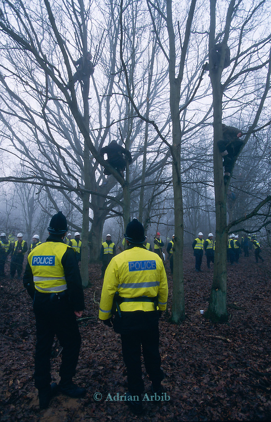 Trees occupied by protesters stop work  beng carried out. Newbury road protest