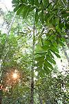 Rainforest in Manu National Park, PERU