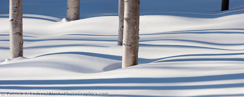 Shadows across fresh fallen snow, birch trees, boreal forest, Fairbanks, Alaska
