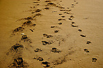 Dingle Footprints