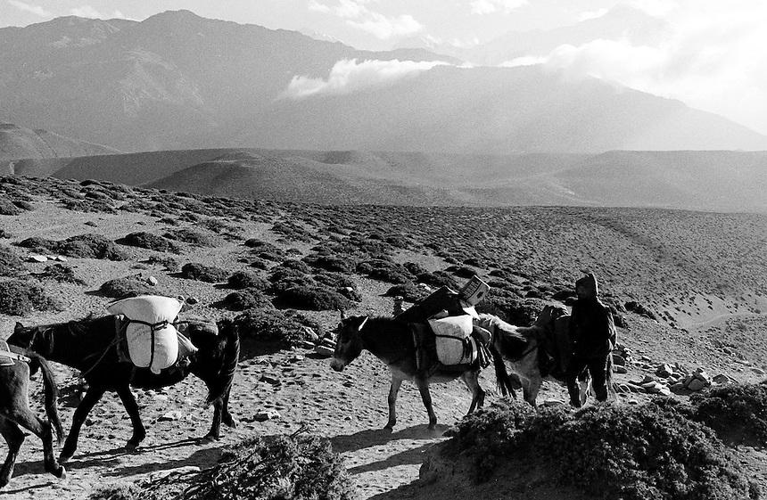 A porter guides his donkey train through the upper reaches of the Kali Gandaki valley, Nepal, 2008. Photo: Ed Giles.