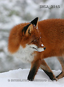 Carl, ANIMALS, wildlife, photos(SWLA2145,#A#)
