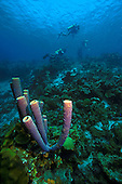 Tube sponges & divers in background