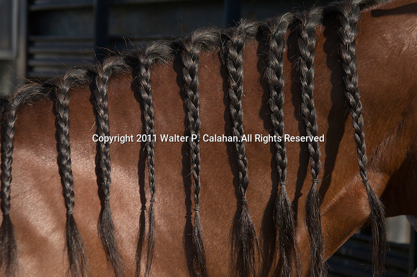 Johnsville, MD: J Bar W Ranch -- Katie Motter's horse 3 for Luck's mane braided.