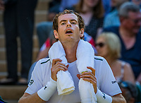London, England, 5 th July, 2017, Tennis,  Wimbledon, Andy Murray (GBR) protects himself against the heat<br /> Photo: Henk Koster/tennisimages.com