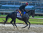 November 1, 2018 : So Perfect, trained by Aidan O'Brien, trains for the Breeders' Cup Juvenile Turf Sprint at Churchill Downs on November 1, 2018 in Louisville, KY. Jessica Morgan/ESW/CSM