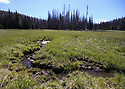 Meadow stream at Blewett Pass, in the Wenatchee Mountains. Stock photography by Olympic Photo Group