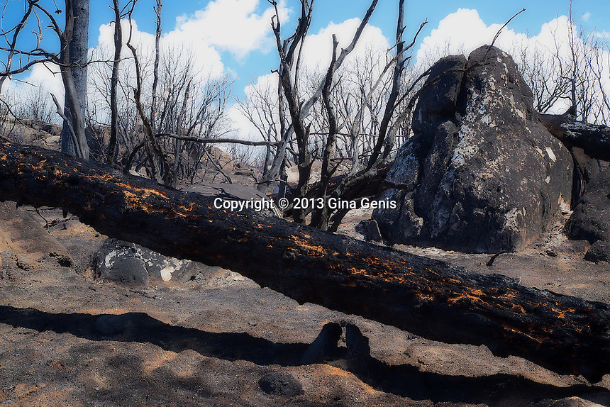 A fallen tree trunk in the aftermath of the Mountain Center fire. July 23, 2013