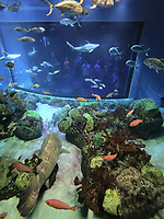 NWA Democrat-Gazette/FLIP PUTTHOFF <br /> Aquarium visitors in the background look through a window  July 6 2018  at fish and divers through a window.