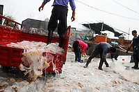 "Zhapo, PRC China has a huge Jellyfish fisherie, the entire town slings laundry tubs of gelatinous mucous like jellyfish if it is cloudy day and they can see the masses of jelly from their boats.  You have to be aware of cultural differences... People in China like to eat jellyfish because of the texture.  But, to me, a jellyfish fishery is ""fishing down the food chain.""  With less and less predators (sharks are down 80 percent) this kind of creature that is lower on the food chain tends to thrive..There are four guys carrying laundry tubs of mucous goo.... they are Cai Xing Duan (crooked back), Cai Xing Ping, Wang Fu Quan, and Cai Xiao Yuan... Contact is thru Cai Xing Ping (who helped us on other stuff) address is Qing An Street, Zhapo, Yangjiang, Guangdong, China..Main contact:.Nicole_artbud@hotmail.com or nicolecheng@vip.sina.com.Cell phone number: +(86) 139 2214 1600.Nicole Cheng.Senior Associate-Guangzhou.Burson Marsteller.Room 6805A, CITIC Plaza, 233 Tianhe North Road.Guangzhou, 510613 P.R.C..+8620 3877 1820 X229 Work Phone.3877 1815 Fax.Nicole_cheng@bm.com.Initially reef fish only came from the South China Sea, but transport developed and fish now come from all over S.E. Asia.  The whole reef fish trade crashed with the 97-98 HK stock market crash.  LRF trade is directly linked to economy.  With China coming online financially the trade is booming.  These fish are often used for celebratory meals in Hong Kong, but in Guangzhou the fish are so cheap and the apartments are so small that many people eat out...  And the stereotype is that there is lots of food left on the table.  Often a fish is popular because of its color... more than its taste."