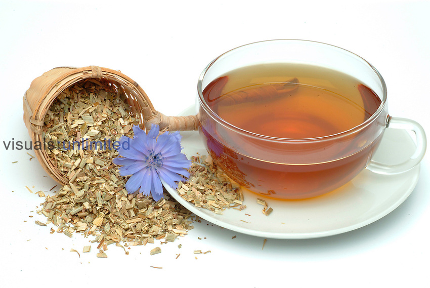 Tea made from Chicory (Cichorium intybus)