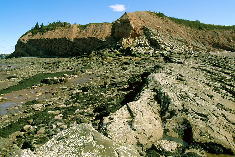 "Coal Age Fossils at ""Joggins Fossil Cliffs"", Joggins, NS, Nova Scotia, Canada - UNESCO World Heritage Site (2008) along Bay of Fundy - Fundy Shore & Annapolis Valley Region"