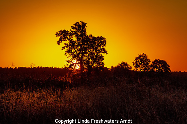 The morning sun peeking over the horizon in Crex Meadows Wildlife Area.