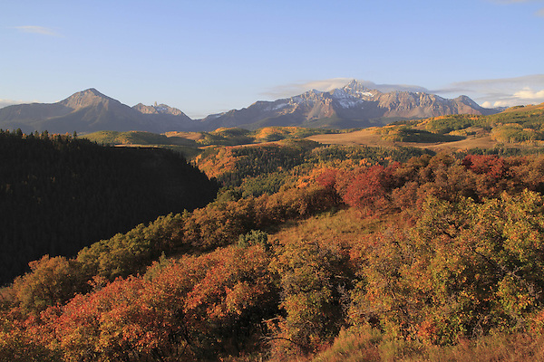 Sunshine (left) and Wilson Peaks with aspen trees in fall foliage,  San Juan Mountains near Telluride, Colorado, USA.
