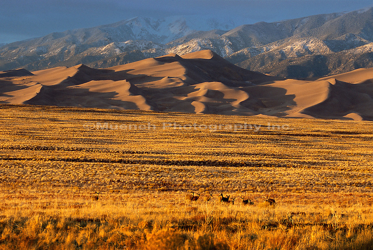 Great Sand Dunes NP  COLORADO
