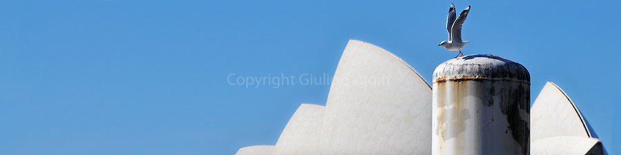 A seagull takes off from a pylon at Circular Quay in the Sydney CBD, with the Sydney Opera House behind.