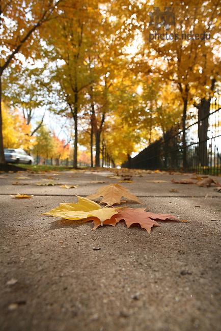 Autumn leaves, ND Avenue