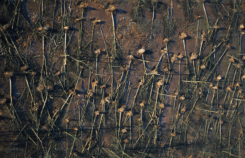 DEFORESTATION STORMS, France. Europe. Foret de la Crete. Haut Marne, Champagne Ardenne. Hurricane force winds uprooted millions of  trees across Europe. Dry weather followed  by heavy rain made the roots vulnerable.  Winds of 100-200kmh swept through the land  causing havoc. Hundreds of millions of trees were knocked down.