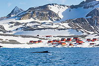 Hope Bay, Antarctic peninsula