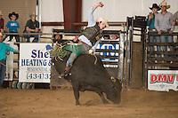 SEBRA - Chatham, VA - 3.11.2016 - Bulls