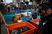 This is the Aberdeen Wholesale Fish Market and restaurant area in Aberdeen, Hong Kong.  Main contacts here are: Chan Wai-Kit +852 6401 2080 or email ccob_afm@fmo.org.hk.  Main office number is +852 2552 0071.  Other contact is Wong Pui-Kwong 2552 8853...Most of the photographs of unloading are at  Wah Chai Seafood 9488 6526 or 552 6188 or 552 4384 or 555 1886.  Initially reef fish only came from the South China Sea, but transport developed and fish now come from all over S.E. Asia.  The whole reef fish trade crashed with the 97-98 HK stock market crash.  LRF trade is directly linked to economy.  With China coming online financially the trade is booming.  These fish are used for celebratory meals... not everyday fare.  In China the company pays for meals and the stereotype is that there is lots of food left on the table.  Often a fish is popular because of its color... more than its taste.