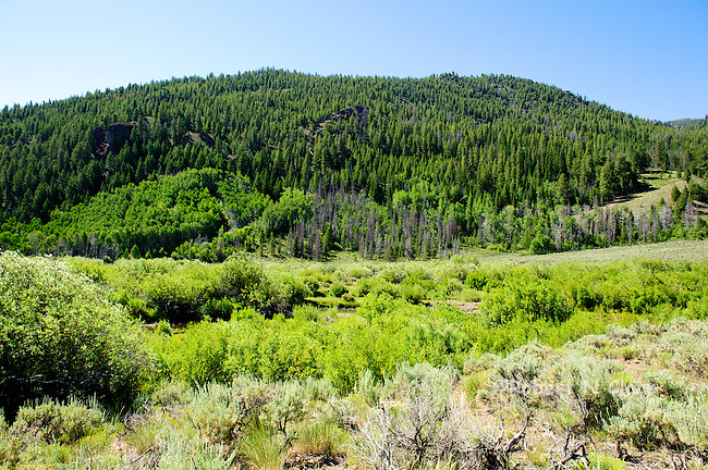 Backcountry off of Trail Creek Rd east of Sun Valley, Idaho