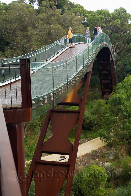 Visitors walk above the treetops on the Federation Walkway in Kings Park.  Perth, Western Australia, AUSTRALIA.